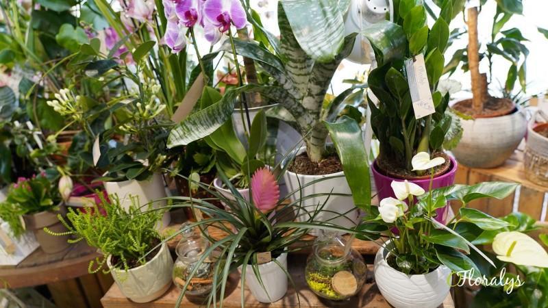 Vente plantes